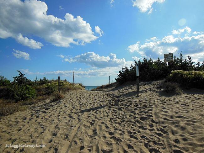 spiaggia_pineta maremma