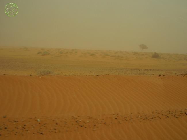 viaggio nel deserto australiano