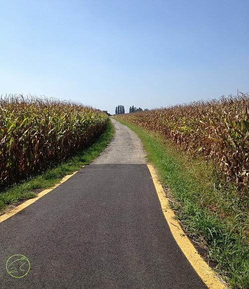 pista ciclabile nei campi