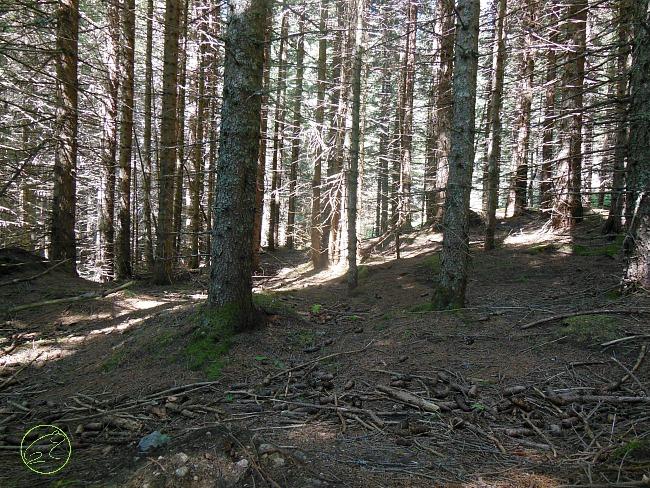 attività natura autunno bosco