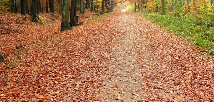 Dal foliage alle castagne: andare per i boschi d'autunno in Lombardia con i bambini