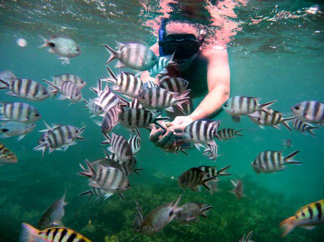 immersioni a mauritius