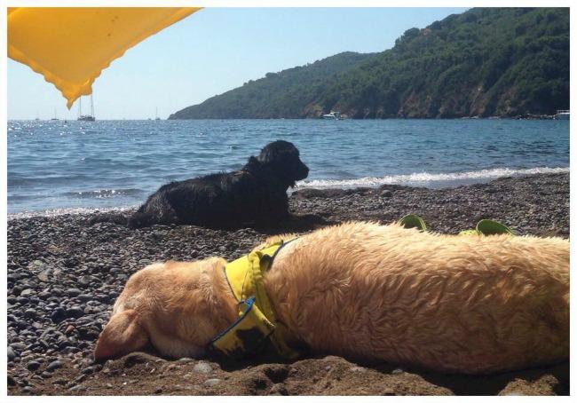 campeggio con cani isola d'elba