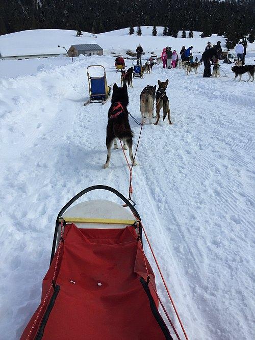 guidare la slitta trainata dai cani