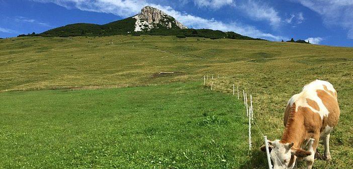 Trekking al Corno Bianco, la prima vetta formato famiglia ai piedi del Latemar