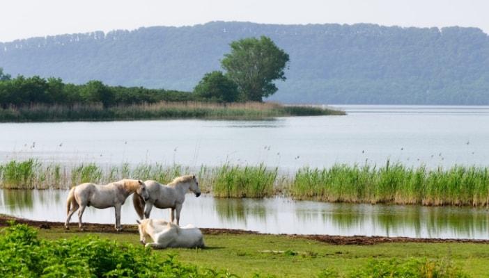 lago di vico con bambini escursioni