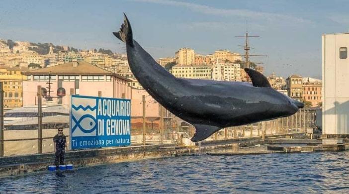 delfini genova
